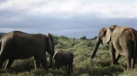 An elephant family at Addo