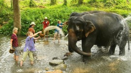 bathng the elephants