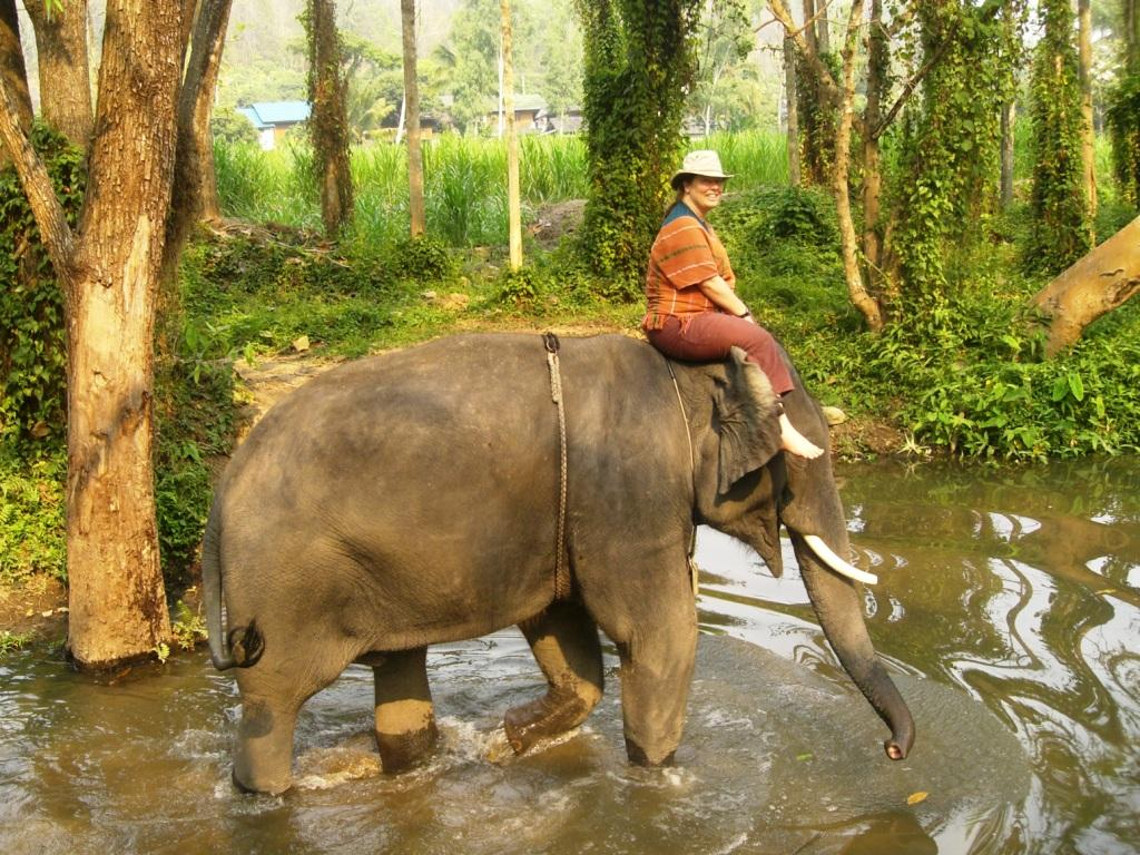 elephant riding For many, it's a dream to ride on an elephant but even if it might seem harmful,  there's an ugly truth behind it that most tourists aren't aware of.