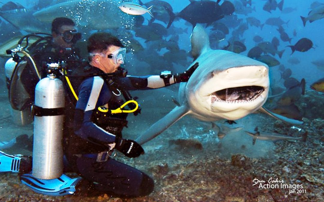 Diving with Bull Sharks in Pacific Harbour, Fiji ...