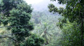 St. Lucia zipline through the rainforest