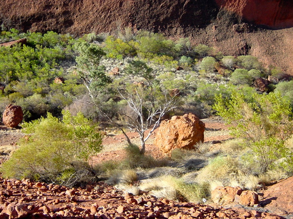 Vegetation Landscape of Australia Outback (Photo credit: MCArnott)