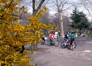 Central Park with cyclists in early spring