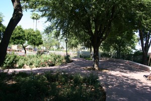 Shade in the Desert Garden Appreciated by Roses (photo credit: Chuck Eirschele)