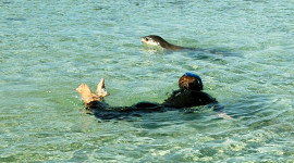 Sea lions love to play with snorkelers. (photo credit: Katherine Rodeghier, c 2012)