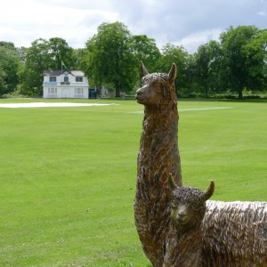 Two bronze alpacas look placid against a green playing field.