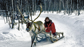 Reindeer Sleighride (Photo Credit: RogersPhotos)