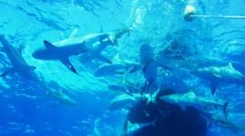Bora Bora Feeding Frenzy