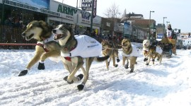 Sled Dogs, Iditarod