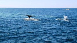 Whalewatching off Cape Cod