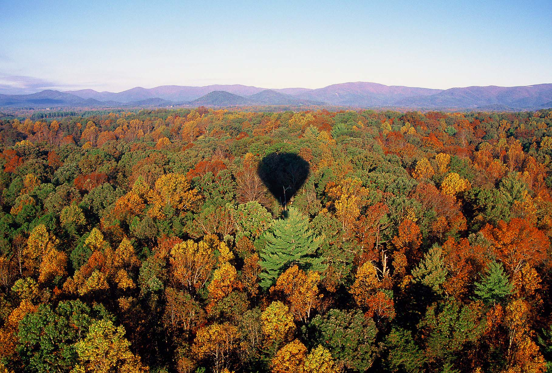 The shadow of a hot air balloon falls on a forest's autumn colors. (photo credit: Katherine Rodeghier, c 2012)