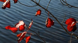 Leaves hang over Knights Pond (Photo by Rachael Cerrotti)