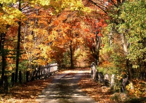 White Mountain Fall Foliage (Stillman Rogers Photo)