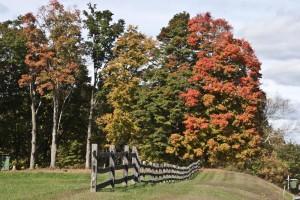 Fall Foliage in Westmoreland, NH (Stillman Rogers Photo)
