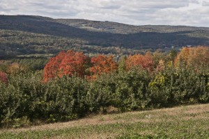 Fall Foliage in the Connecticut River Valley (Stillman Rogers Photo)