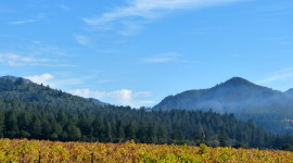 Lush, green vines turn golden as fall enters Sonoma County's Valley of the Moon. l