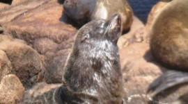 seals in Uruguay