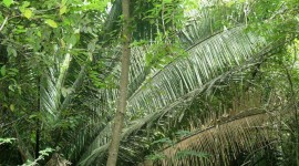 Plants in the tropics grow large and fast. /