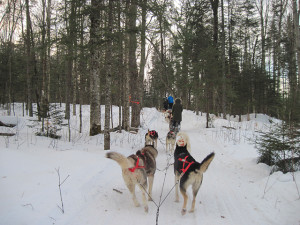 Dogsled in the forest