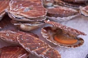 Italy, Venice, fish market, Fabbriche Vecchie, fish, seafood