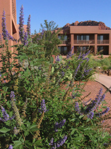 Red Mountain Resort has a low-key and relaxed vibe