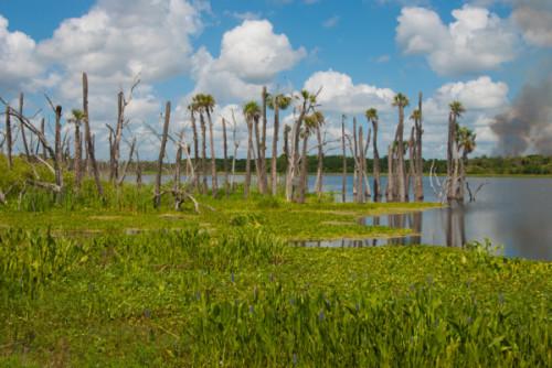 Orlando-Wetlands-Park-SandraFriend