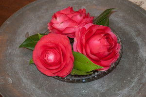 Camellias on a plate at Maclay Gardens