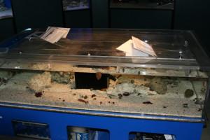 Touch Tank at Warden Aquarium