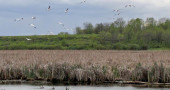 Hundreds of bird species flock to Horicon Marsh. ©Melanie Radzicki McManus