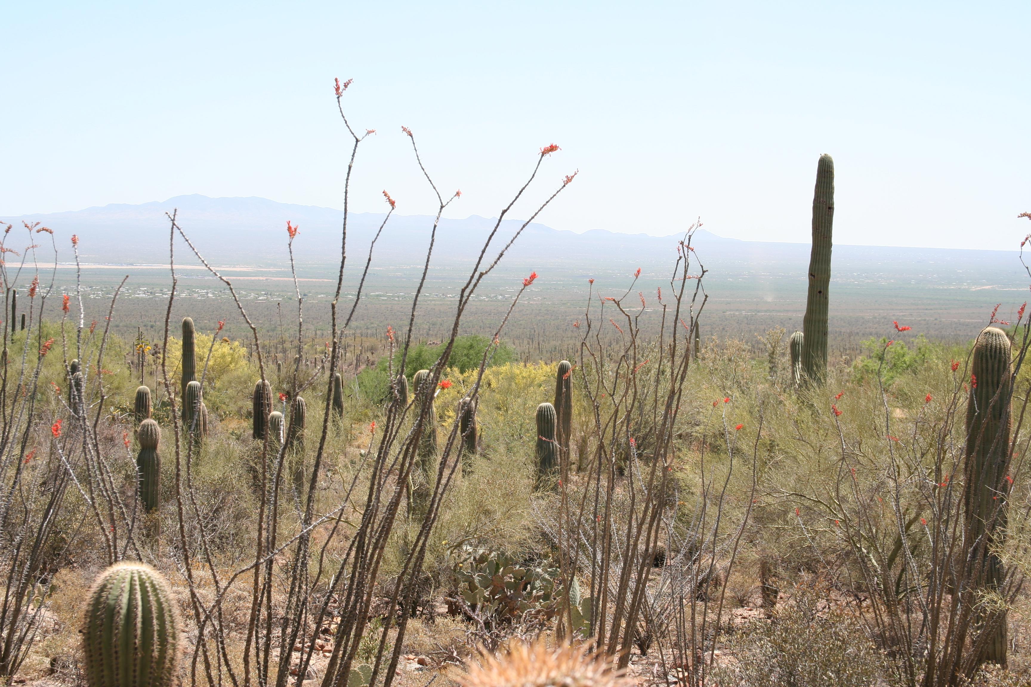 The Arizona Desert Hide And Seek With A Rattlesnake Buckettripper
