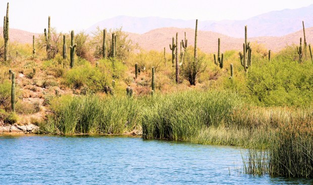 Marshes at Saguaro Lake