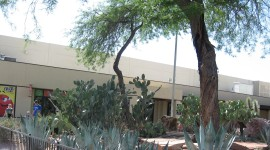 Ethel M's Botanical Cactus Garden