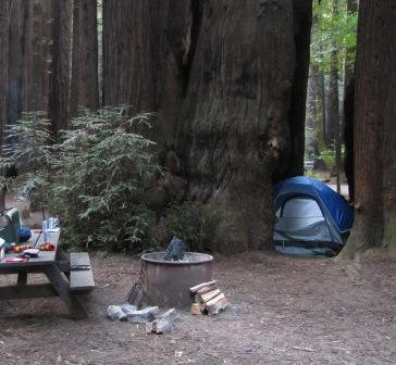 Camping Inside a Redwood Tree