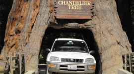Driving Through the Chandelier Tree