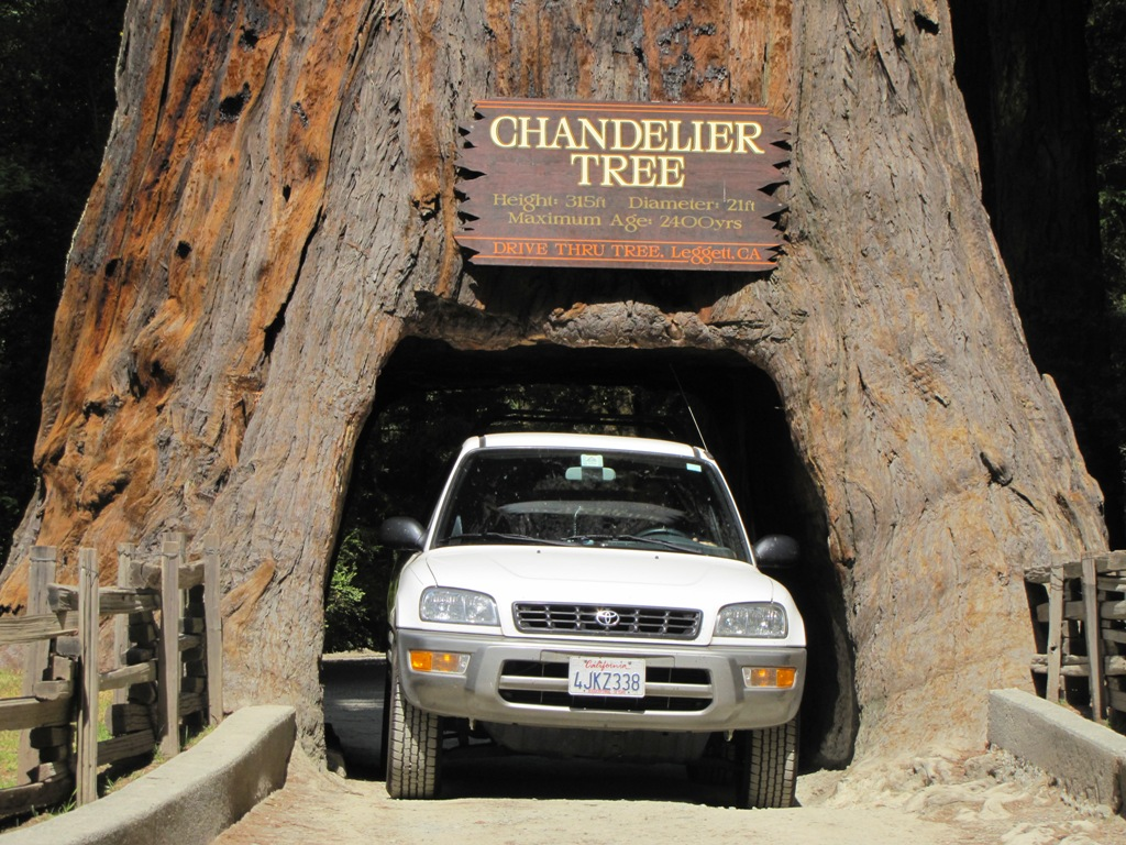 Driving through a redwood in northern california buckettripper arubaitofo Choice Image