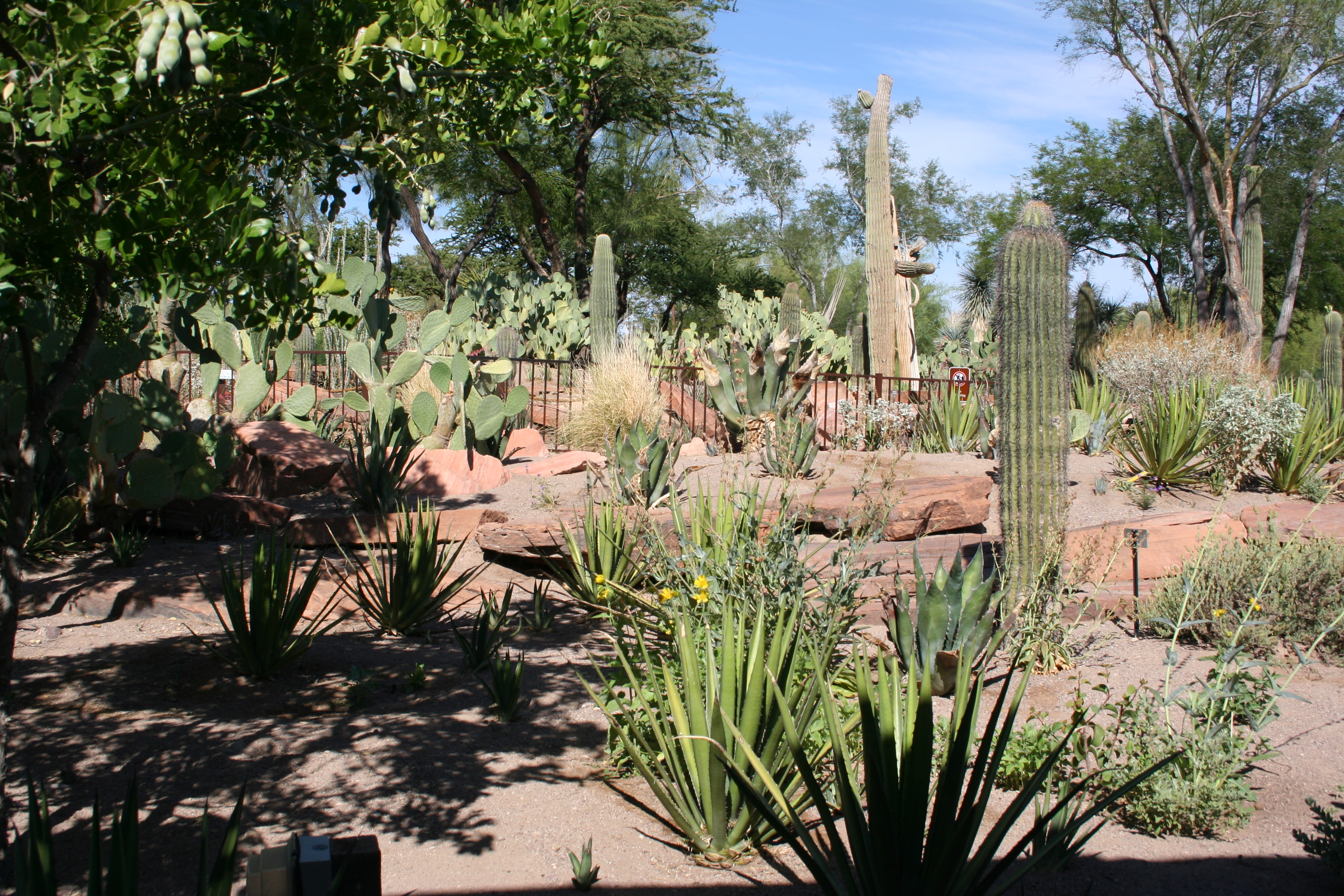 Eating Chocolates in Ethel M's Botanical Cactus Garden in ...