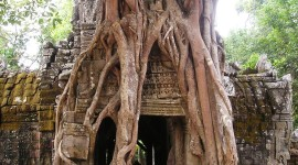 Tree roots grow over a temple in Siem Reap, Cambodia