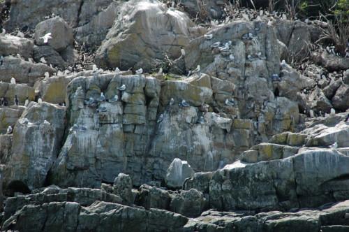 Gros Pot Island aka The Rookery (Roberta Sotonoff)