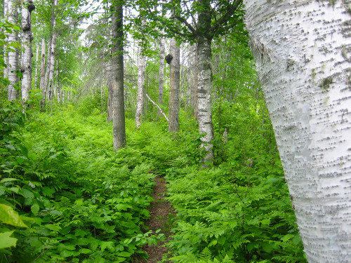 Isle Royale footpath (Sandra Friend)