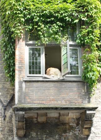 A local Bruges resident enjoys th view of the canal
