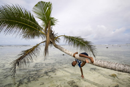 Local boy plays on palm trees on beach of Kosrae, Federated States of Micronesia (FSM). Photo by Yvette Cardozo.