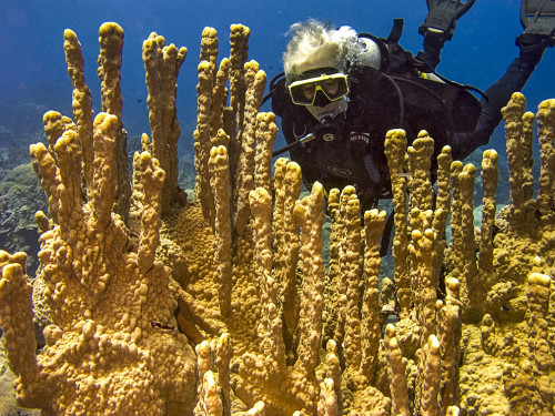 "Woman diver floats over pillars of ""castle coral"" off Hiroshi Point, Kosrae, FSM. Photo courtesy Kosrae Village Ecolodge"