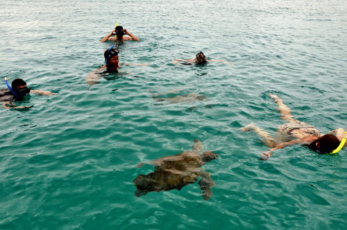 Swimming with leatherbacks. Photo by Seattle Dredge