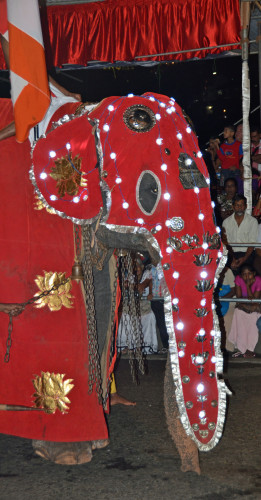 Elephant marching in the parade. (Roberta Sotonoff)