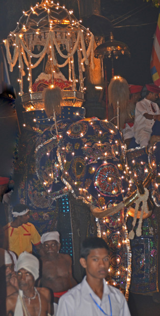 Elephant carrying Tooth Relic (Roberta Sotonoff)