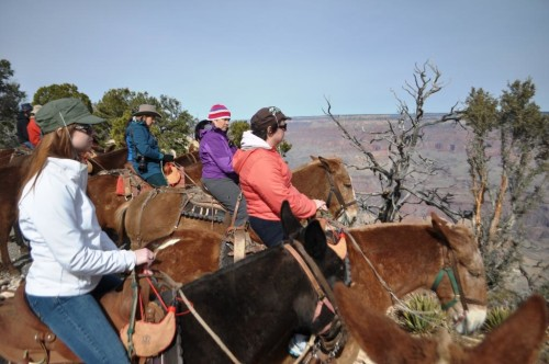 Horses and Riders at the edge of the Grand Canyon