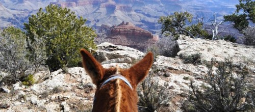 Riding Grand Canyon