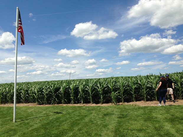 The iconic cornfield from which ballplayers emerge