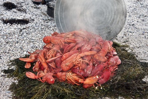 Lobster dinner on Deer Island (photo by Stillman Rogers)