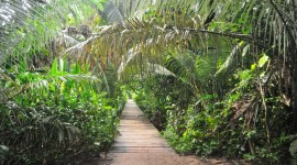 Into the heart of the rainforest